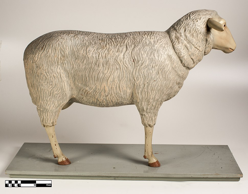 Didactic model of a sheep muscular system 01-FMVZ USP-28.jpeg