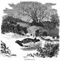 Die Gartenlaube (1861) b 557.jpg