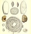 Die fossile Flora der Permischen Formation (1864) (20728292840).jpg