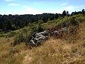 Dipsea Race - Course - Halfway Rock.jpg