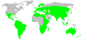 Distribution.oonopidae.1.png