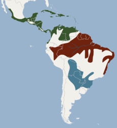 Distribution of Noctilio leporinus.png