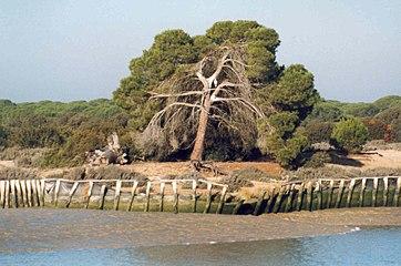 Doñana National Park from the river.jpg