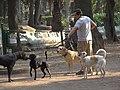 Dog Walker in Parque Mexico - Condesa District - Mexico City - Mexico (6480181701).jpg