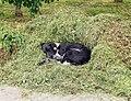 Dog in Gori.jpg