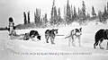 Dog sled N-1979-050-0005.jpg