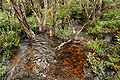 Dove Lake Stream - Tasmania.JPG