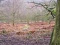 Downs Banks Valley - geograph.org.uk - 1701074.jpg