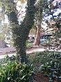 Downtown, San Antonio, TX, USA - panoramio (12).jpg