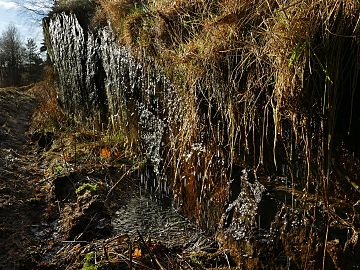 Drainage water from a forested area dripping into a ditch 1.jpg
