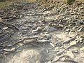 Dried creek.jpg