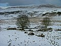 Drystane Enclosure and Trees in March - geograph.org.uk - 131933.jpg
