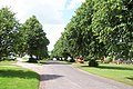Dufton's avenue of limes - geograph.org.uk - 2005193.jpg