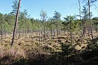 Dulbju acs purva dabas lieguma dienvidu daļa.jpg