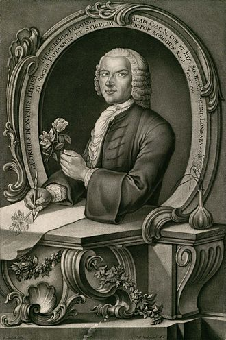 Georg Dionysius Ehret - Georg Dionysius Ehret