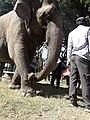 Elephant20171111 122133.jpg