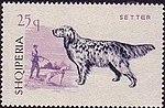 English-Setter Albania stamp.jpg