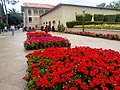 Eram garden Beautiful 4.jpg