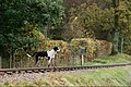 Eskdale and Ennerdale Foxhounds (30374503463).jpg