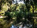 Estany del jardí de Montfort.JPG