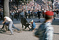 Fêtes de Bayonne-Courses de vaches (3)-1965 08 08.jpg