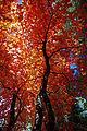 Fall colors on the top of Mogollon Rim (4015305934).jpg