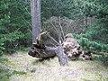 Fallen tree. - geograph.org.uk - 13492.jpg
