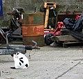 Farm cat - geograph.org.uk - 435819.jpg
