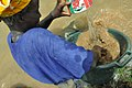 Femmes à la recherche de l'encens dans le Fleuve à Kayes@Nd Ndeye Seyni SAMB (1).jpg