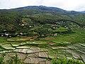 Fertile Paro valley AJT Johnsingh IMG 1049.JPG