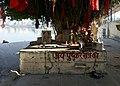 Ficus benghalensis à Pushkar (Rajasthan) (3).jpg