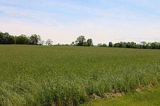 Dorrance Township, Luzerne County, Pennsylvania Township in Pennsylvania, United States