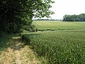 Fields of Barley - geograph.org.uk - 21171.jpg