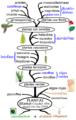 Filogenia vegetal.png