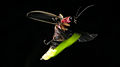 Firefly 2014-07-08 191-1.jpg
