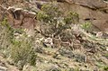 Flaming Gorge deer (3631213541).jpg