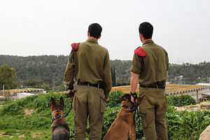 Flickr - Israel Defense Forces - Canine Brothers Take in the Scenery.jpg