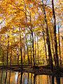 Flickr - Nicholas T - Hogback Ridge Park (5).jpg