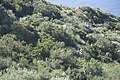 Flore Sicilienne-2036.jpg