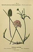 Flore coloriée de poche du littoral méditerranéen de Gênes à Barcelone y compris la Corse (6244459358).jpg