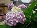 Flower20180523 101036.jpg