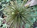 Flower in our garden.jpg