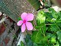 Flower view.jpg