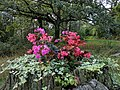 Flowers-on-trunk.jpg