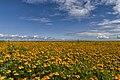 Flowers (37083858606).jpg