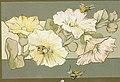 Flowers in Decorative Patterns 2.jpg