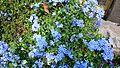 Flowers in Pattaya.jpg