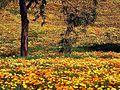 Flowers meadows.jpg