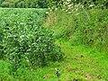Footpath to Draycott Farm, Draycot Foliat - geograph.org.uk - 859444.jpg