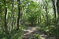 Forest in Mt.Nandai 13.jpg
